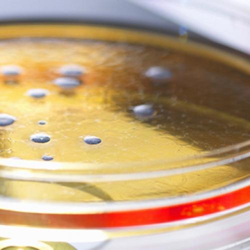 新化粧品法規:「化粧品微生物容許量基準表」變更